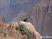 Peru:PB293450.jpg