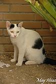 貓貓狗狗:瞇瞇眼