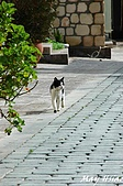 2010 Antalya/Selcuk/Kusadasi@Turkey:DSC_3530.jpg
