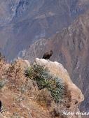 Peru:PB293446.jpg