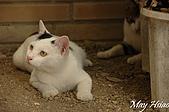 貓貓狗狗:大眼妹與瞇瞇眼