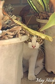 貓貓狗狗:大眼妹