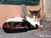Italy:P6113586.jpg