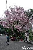 2009/03/19 淡水元天宮賞櫻遊:2009/03/19 淡水元天宮