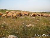 2009 Pammukalle不同的風光(土耳其):巧遇牧羊老伯