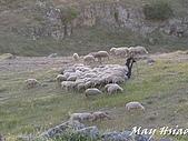 2009 Pammukalle不同的風光(土耳其):另一位牧羊青年