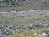 2009 Pammukalle不同的風光(土耳其):牧羊犬