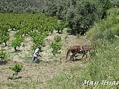 2009 希臘小鎮Sirince@Selcuk (土耳其):IMG_1023.jpg