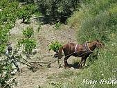 2009 希臘小鎮Sirince@Selcuk (土耳其):IMG_1025.jpg