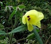 植物:ZEBxTGppD8kFjZcXuZJ3RA.jpg