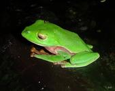 兩棲爬蟲類:ZMXLpQ2_PYoJTF6vxWPqag.jpg