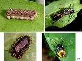 昆蟲 vs 植物:1-2014~8~55.jpg