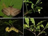 昆蟲 vs 植物:1-2014~8~512.jpg