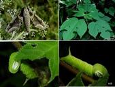 昆蟲 vs 植物:1-2014~8~511.jpg