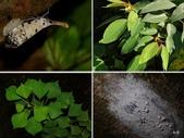 昆蟲 vs 植物:1-2014~8~517.jpg