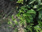 植物:VTCojN1_rlx2RMGRUIV6iA.jpg