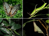 昆蟲 vs 植物:1-2014~8~58.jpg