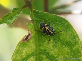 昆蟲 vs 植物:1-10649104_10202402652462299_5980354586435992503_o.jpg
