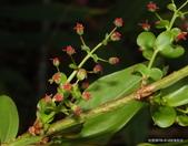 植物:1-107-DSC07435.JPG