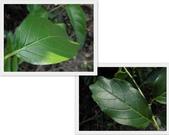 植物:NNH4r6a_Z3luXN9ncXTesA.jpg