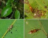 昆蟲 vs 植物:1-2014~8~59.jpg