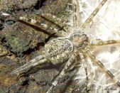 蛛形綱:O2cRB90ukZqF_PbgbzwRdg.jpg