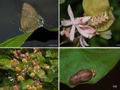 昆蟲 vs 植物:1-2014~8~515.jpg