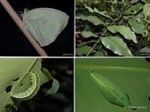 昆蟲 vs 植物:1-2014~8~513.jpg