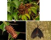昆蟲 vs 植物:1-2014~8~51.jpg