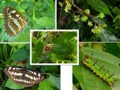 昆蟲 vs 植物:1-2014~8~516.jpg