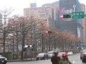 20120405木棉:IMG_0016.JPG