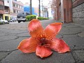 20120405木棉:IMG_0007.JPG