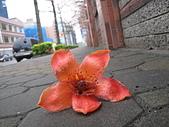20120405木棉:IMG_0008.JPG