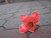 20120405木棉:IMG_0010.JPG