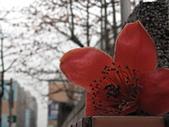20120405木棉:IMG_0012.JPG