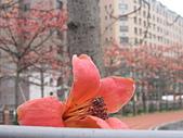 20120405木棉:IMG_0013.JPG