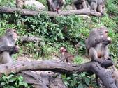 2014-06-02郭叔叔獼猴園&新都生態公園:2014060200034.jpg