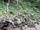 2014-06-02郭叔叔獼猴園&新都生態公園:2014060200010.jpg