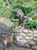 2014-06-02郭叔叔獼猴園&新都生態公園:2014060200019.jpg