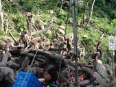 2014-06-02郭叔叔獼猴園&新都生態公園:2014060200023.jpg