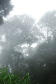 2014-07-21忘憂森林:2014072000206.jpg