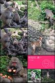 2014-06-02郭叔叔獼猴園&新都生態公園:2014060200043.jpg