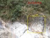 龍澗峽谷:山豬.jpg