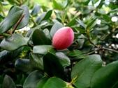 迷人的果實... 5:卡利撒