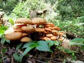 野生菇:DSCN0438