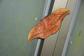 昆蟲篇...4:姬透目天蠶蛾