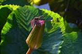 蜻蜓之吻:DSC_0026