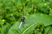 蜻蜓之吻:DSC_0168