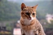 喵喵 ●  貓:DSC_0021