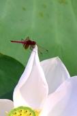 蜻蜓之吻:DSC_0030